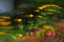 Filby in Bloom surreal flower photographs